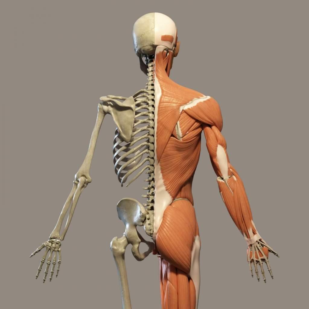 thoracolumbar fascia and low back tightness