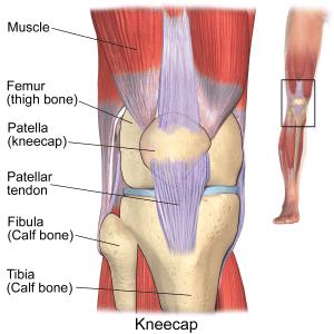 runners knee causes and treatment knee anatomy the prehab guys