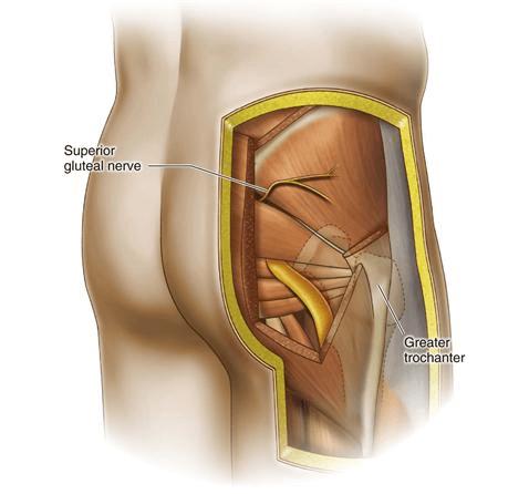 turn on glutes muscle anatomy prehab guys