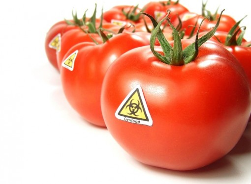 """Independent experts with the EFSA (European Food Safety Authority), EU's """"official"""" food watchdog have discovered a previously unknown virus that is present in 54 of the 86 Genetically Modified plants approved for commercial growing and food in the US. The Genetically modified crops are being grown for both human and animal consumption and include Corn and Soy. This virus gene has the possibility of being poisonous to humans."""