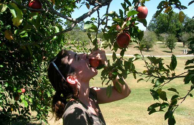 If you really love your peaches and want to shake a tree, there's a map to help you find one. That goes for veggies, nuts, berries and hundreds of other edible plant species, too.