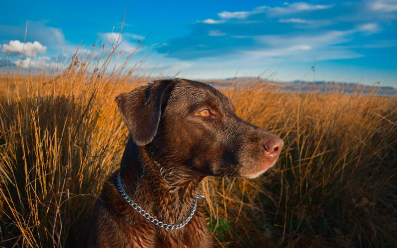 What kind of dog makes the best hunting dog?