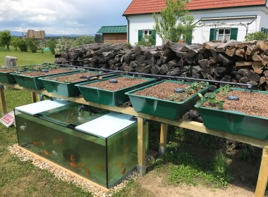 In this article we're going to discuss how you can grow plants using fish in an aquaponics system.