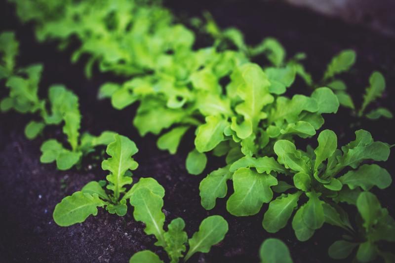 Secrets to healthy soil