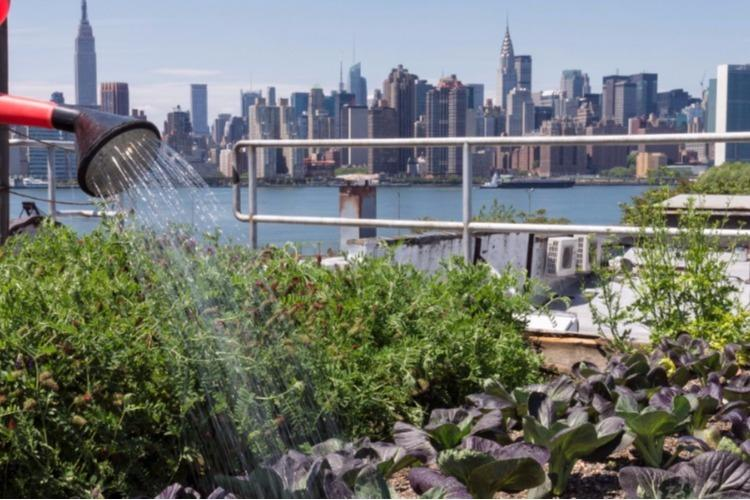 The Best Urban Farming & Gardening Plants