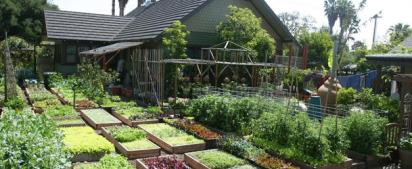 A homesteader's urban farm