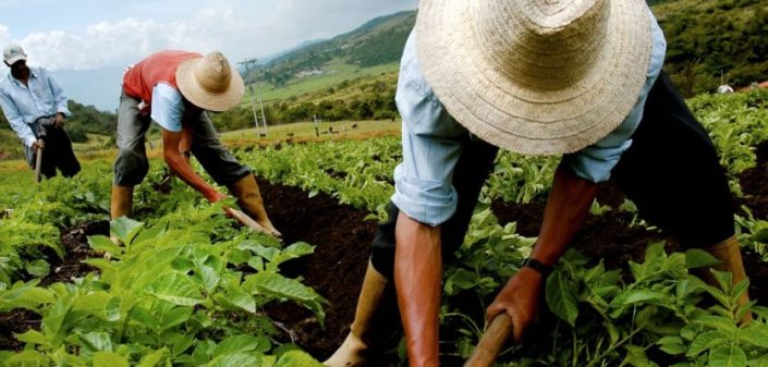 farming in Venezuela