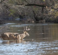 Best Hunting Times for White Tailed Deer