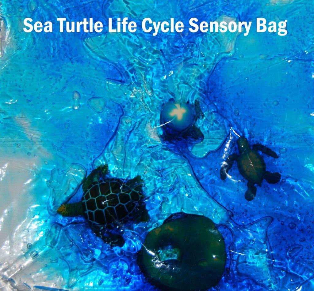 Ocean Theme Activities For Preschool Sea Turtle Life Cycle Amp Sensory Bags