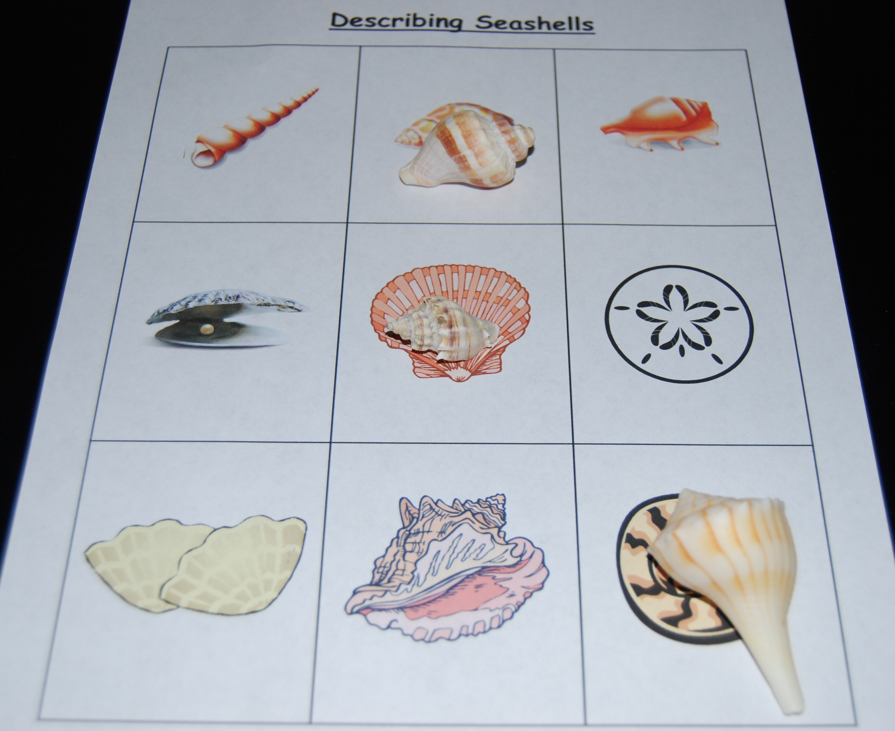 Describing Seashells The Preschool Toolbox Blog