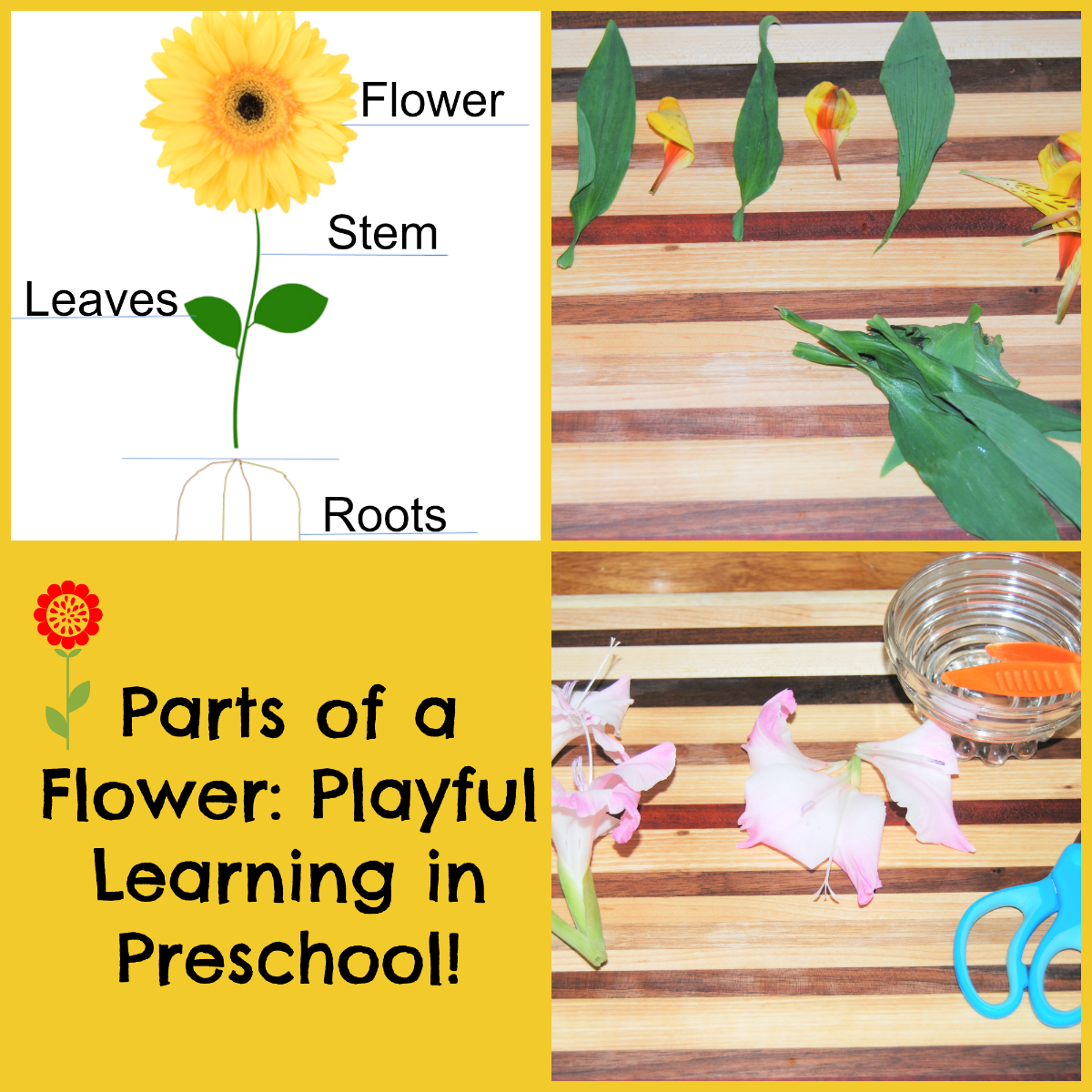 Parts Of A Flower Playful Learning Flower Centers For