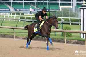 DRF Report: Game Winner To Miss G1 Travers Stakes - The Pressbox