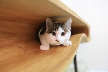 Modern-table-for-cats-5-1024x613