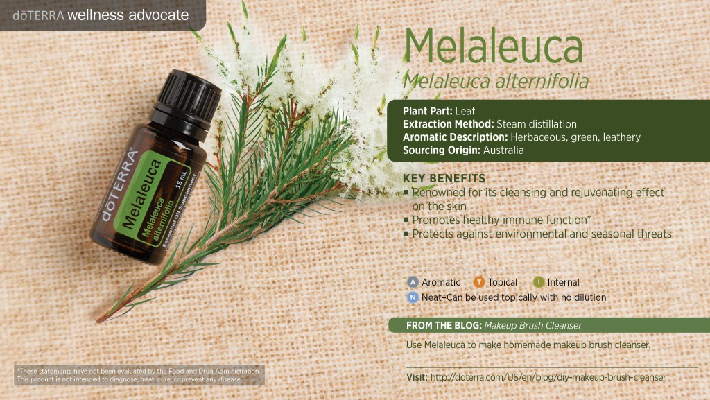 doterra melaleuca essential oil uses benefits