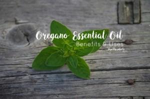 doTERRA Oregano Essential Oil – Benefits, Uses, Video