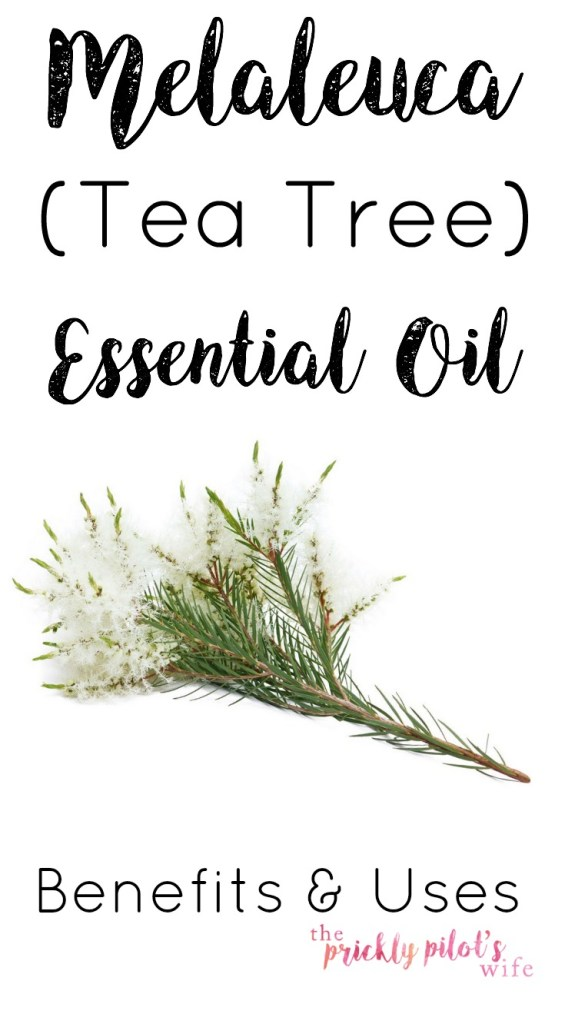 doterra melaleuca tea tree essential oil benefits uses