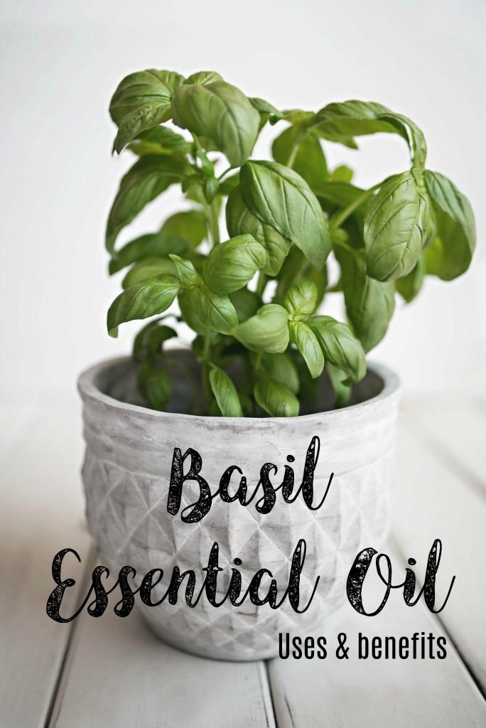 doterra basil essential oil