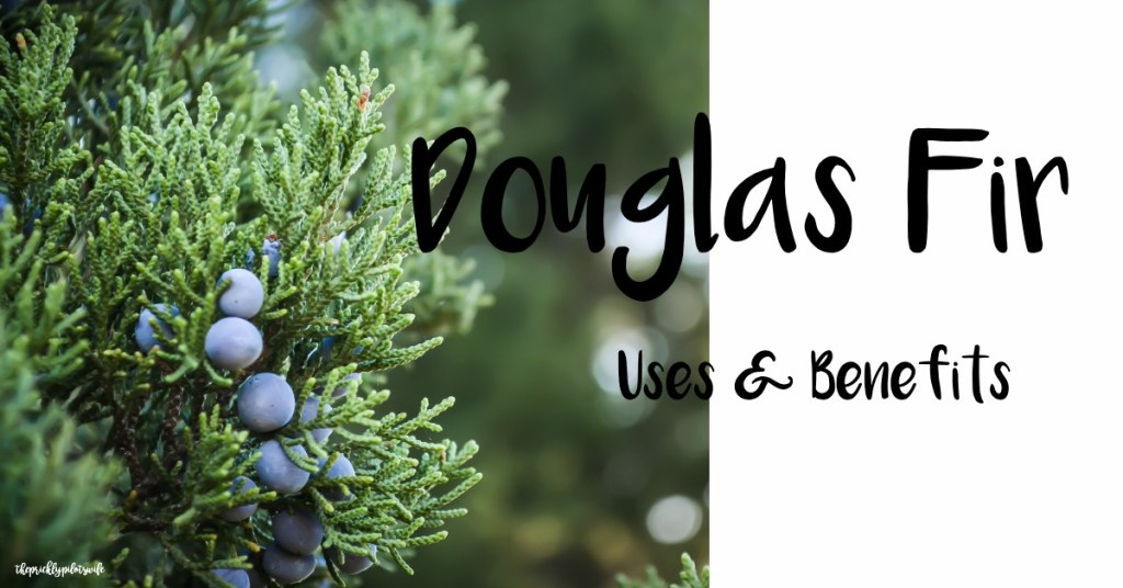"""Horizontal image of a fir branch with violet berries and """"Douglas Fir Essential Oil Uses and Benefits"""" written over the image. // The Prickly Pilot's Wife"""