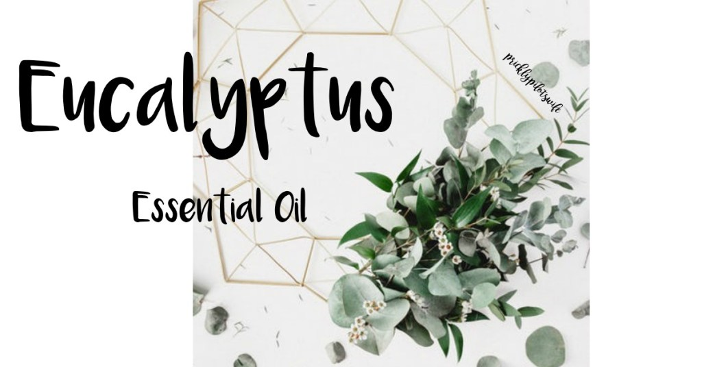 "Image of a bouquet of eucalyptus and  mini white flowers against a geometric shape background with ""Eucalyptus Essential Oil"" written over it // Prickly Pilot's Wife"