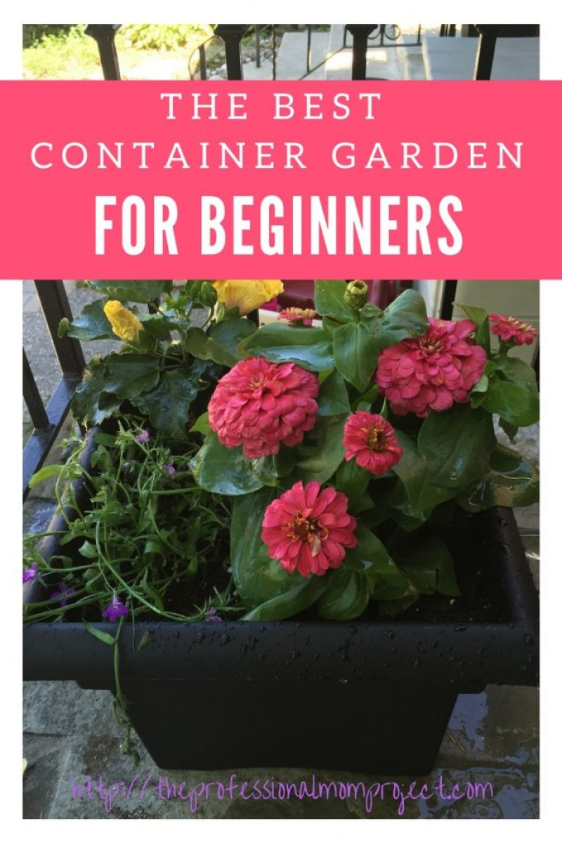 How to plant a beautiful and simple container garden to add colour and life to your porch this summer! Perfect DIY container garden for beginners to start with.