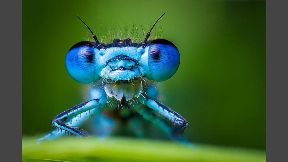 blue damselfly.jpg