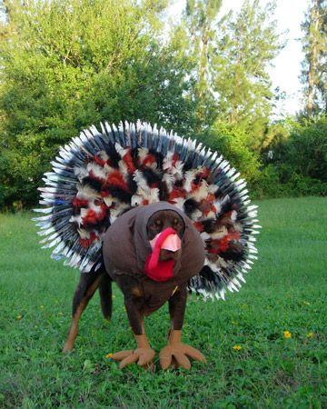 turkey dobe.jpg