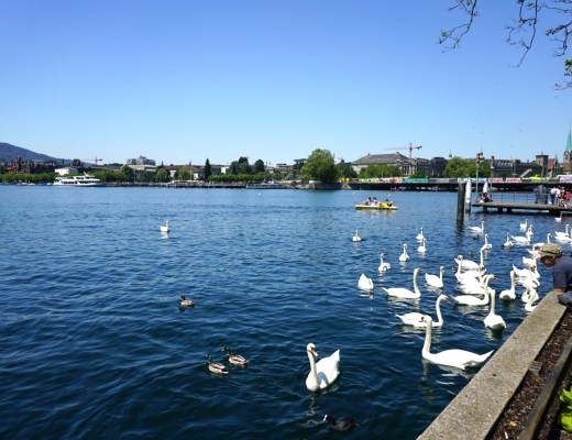 Lake Zurich - The Project Lifestyle
