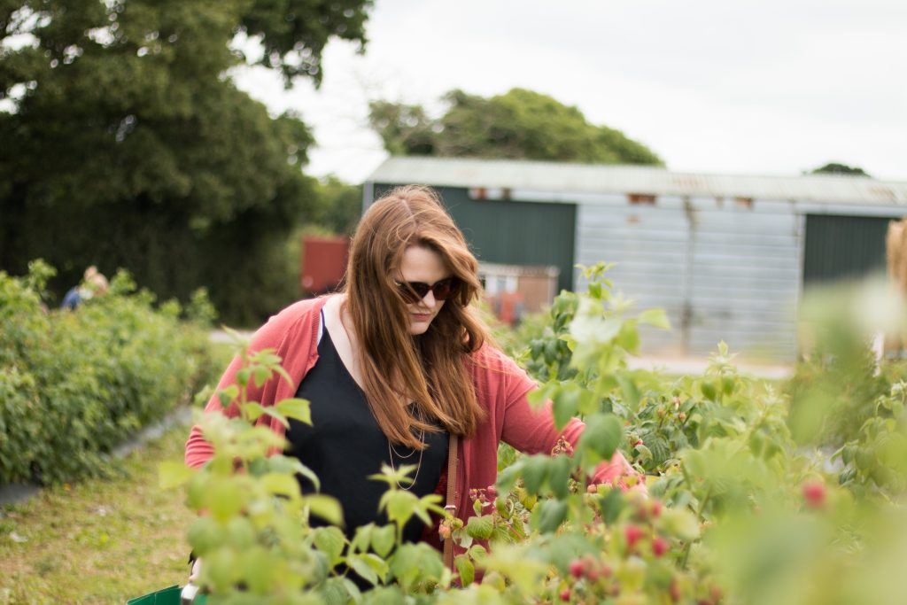 Strawberry Picking at Pickwells, Southampton - The Project Lifestyle