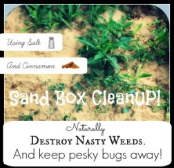 Sand Box Cleanup