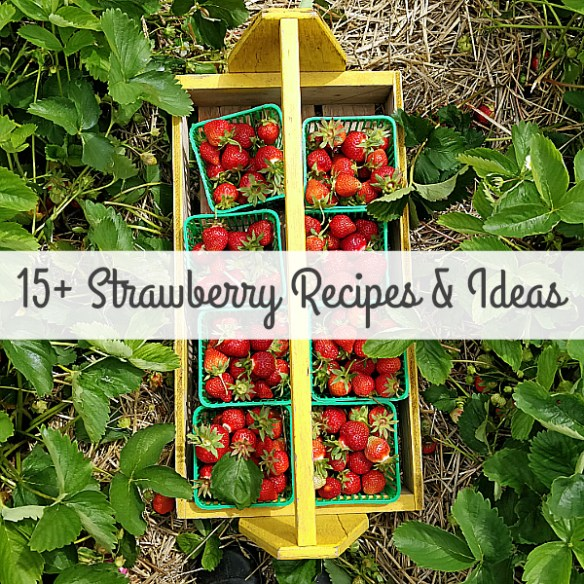 15+ Strawberry Recipes & Ideas To Try!