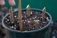 ht-how-to-take-hardwood-cuttings-5.jpg