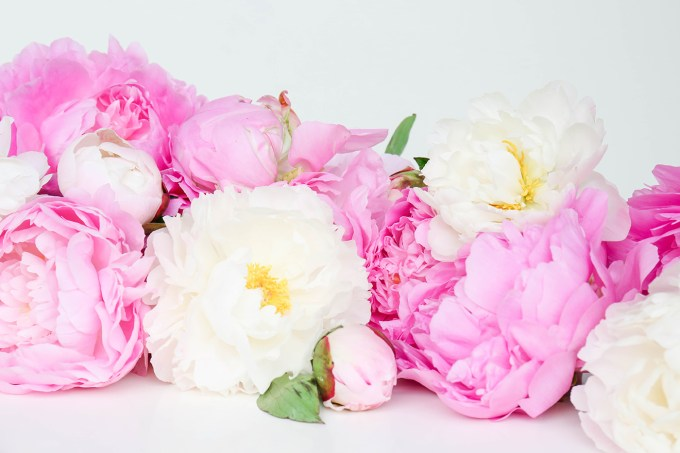 Peonies Wallpaper Download || www.theproperblog.com