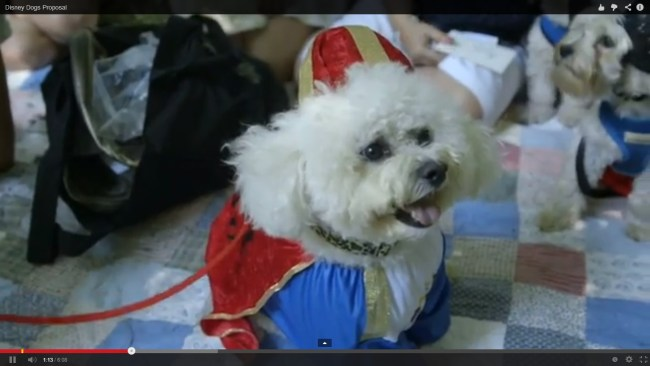 How cute is Monty dressed up as Prince Charming in the Disney Dogs Proposal we created!!