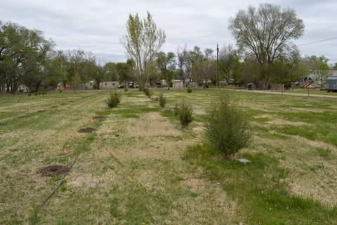 City's Tree Nursery