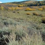 Colorado Parks and Wildlife Receives $5,696 to Improve Two Buttes State Wildlife Area Habitat