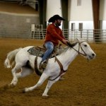 LCC Equine Students Showcase Semester's Work