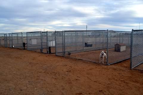 lamar-animal-shelter-1