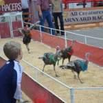 Release the Turkeys!!