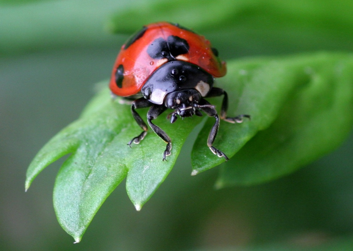 Good Bugs: Beneficial Insects