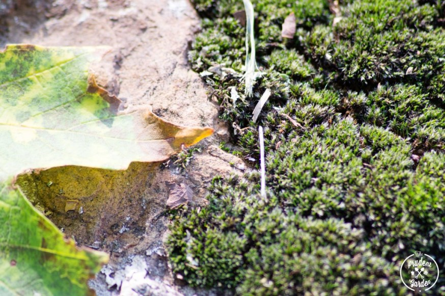 leafandfern