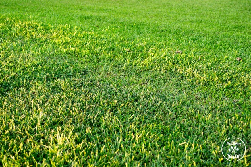 The Making of a Great Lawn