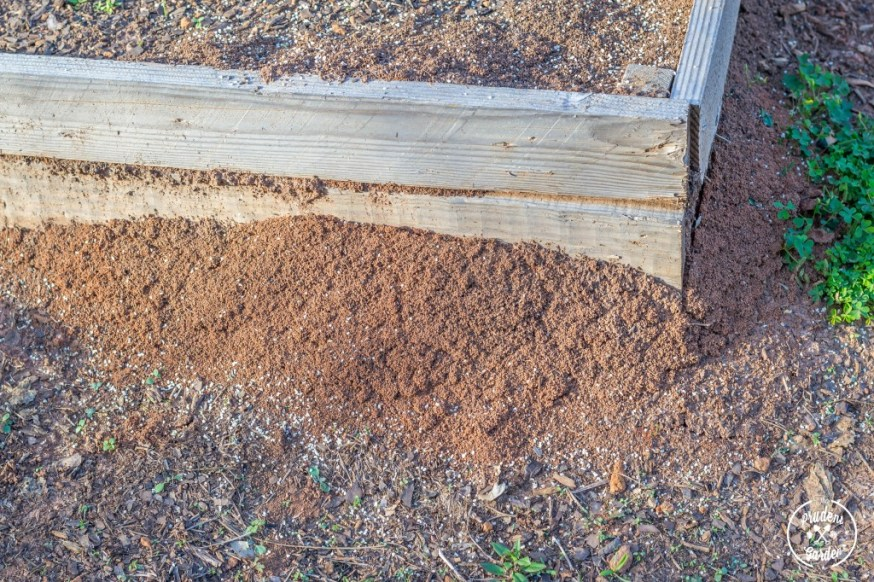 Fire Ants on the Move