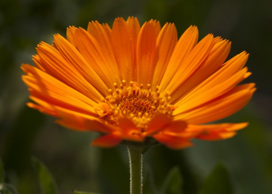 Great Plants To Start From Seed In 2015 Part 2