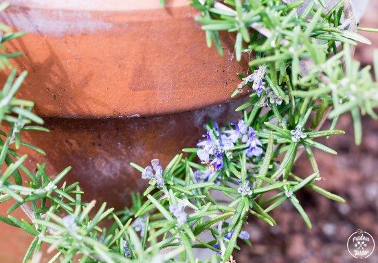 Garden Phenology