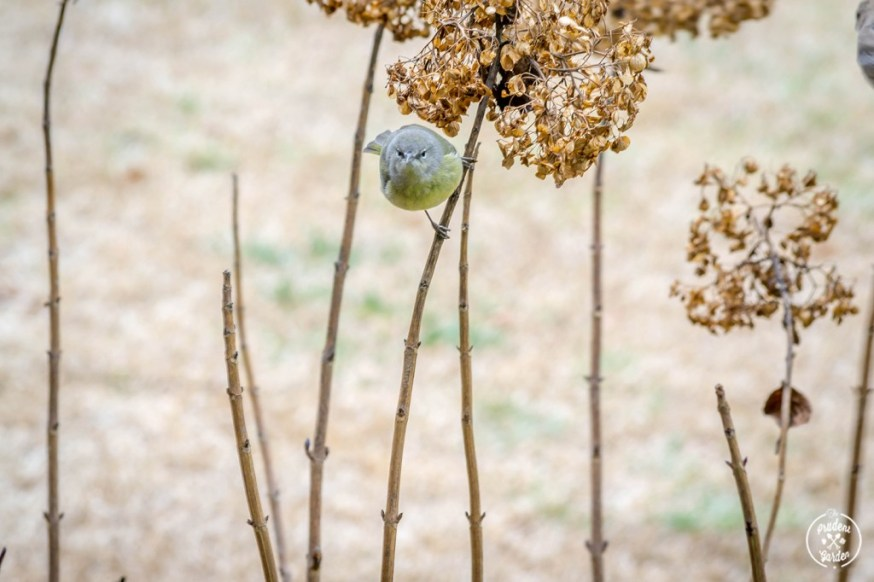 How to Use Birding in a Homeschool Curriculum