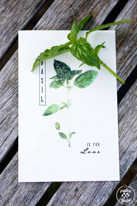 Free Printable Herb Cards