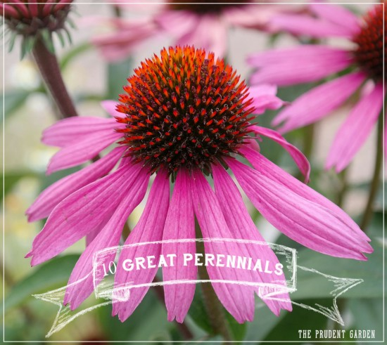 10 Great Perennials Every Flower Garden Needs