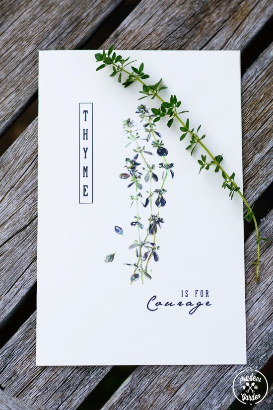 Free Printable Herb Cards