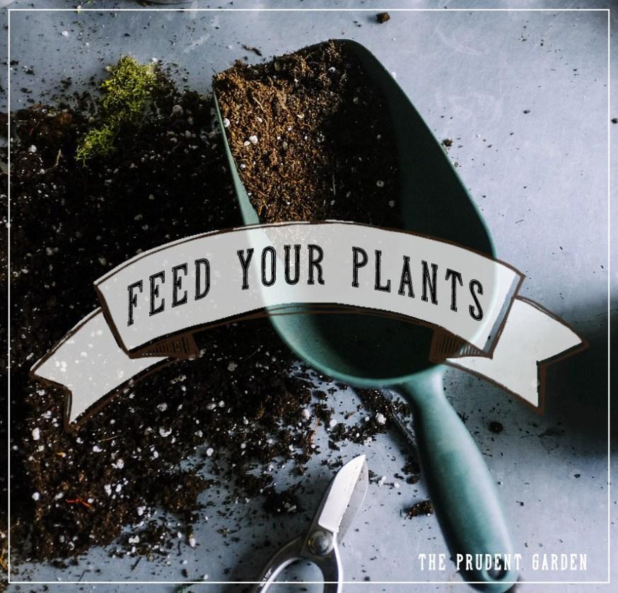 Feed Your Plants: Organic Starter Fertilizer Comparison