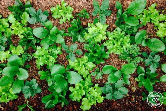 Grow Your Own Green Smoothie Garden